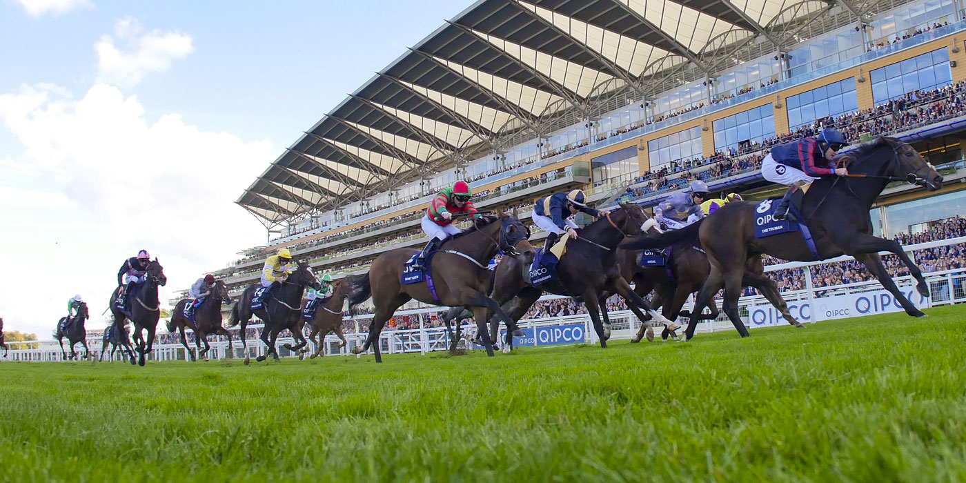 The Tin Man winning the G1 Qipco British Champions Sprint Stakes